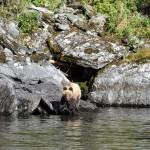 животные Алтайского заповедника
