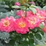 цветы на аллеях