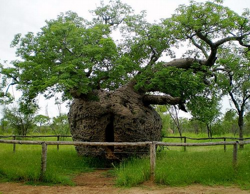 дерево тюрьма
