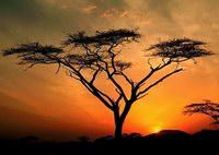 деревья мира