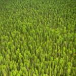 Лесные массивы Коми