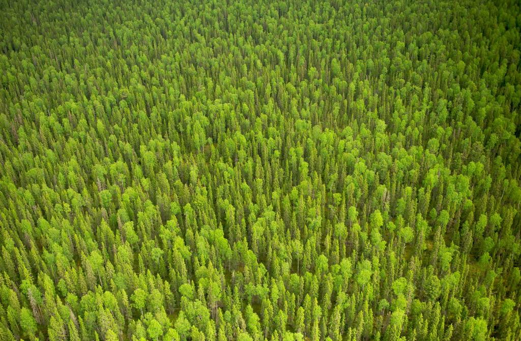 Девственные леса коми туризм