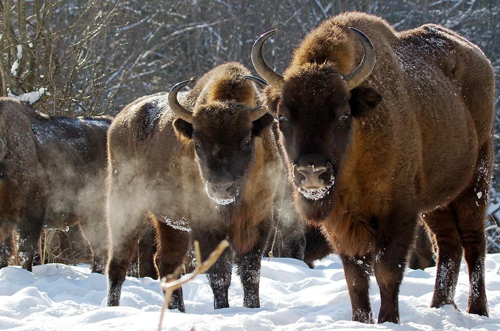 Национальный парк Беловежская пуща