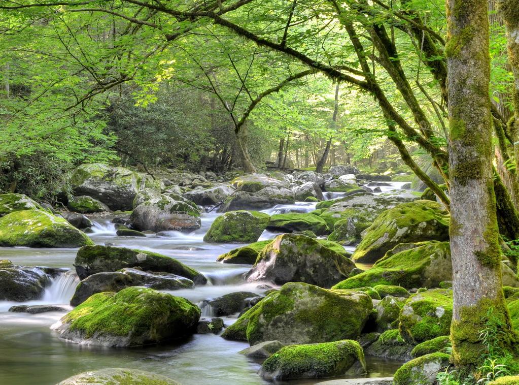 Национальный парк Грейт Смоки Маунтинс