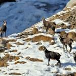 обитатели парка Гран Парадизо