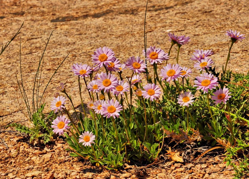 растительность Бектау-ата