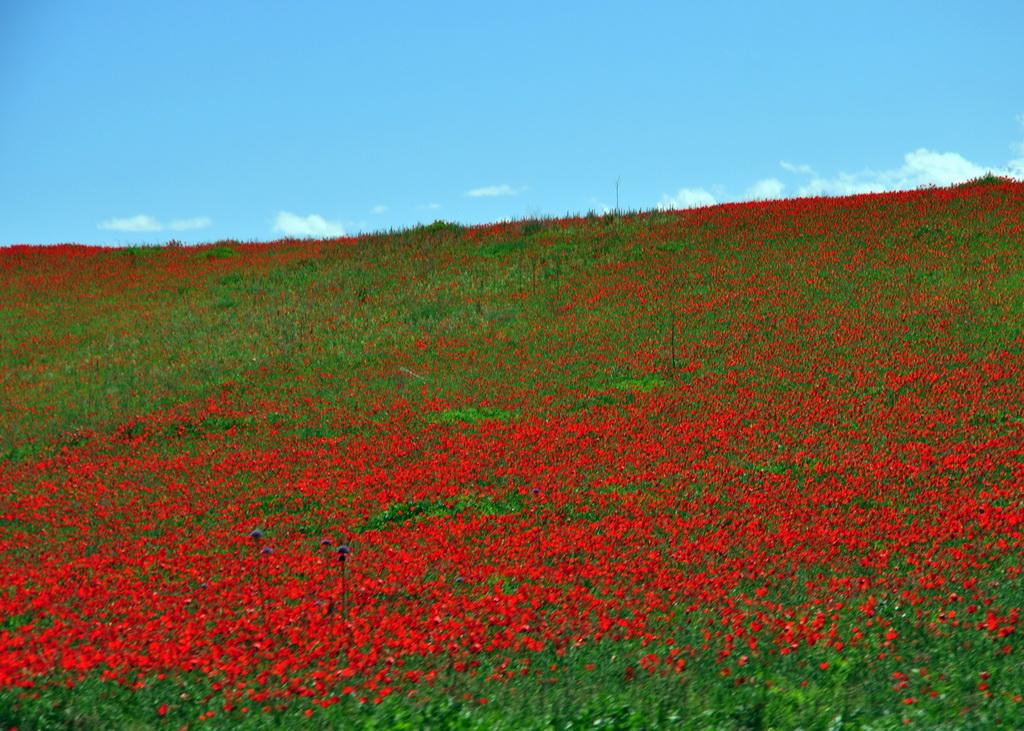 казахская степь весной