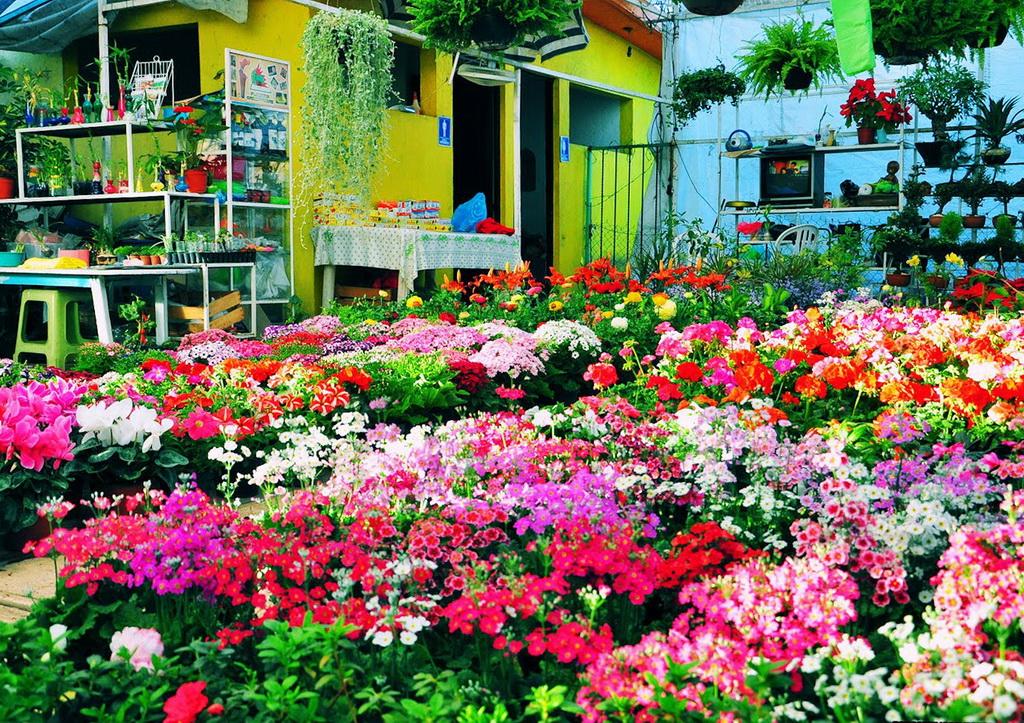 На островах Сочимилько выращивают огромное количество цветов